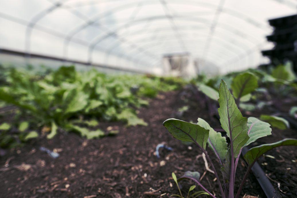 Gemüseanbau bei Terra