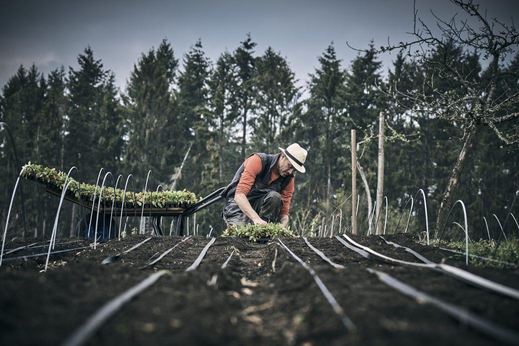 Bio-Gemüseanbau